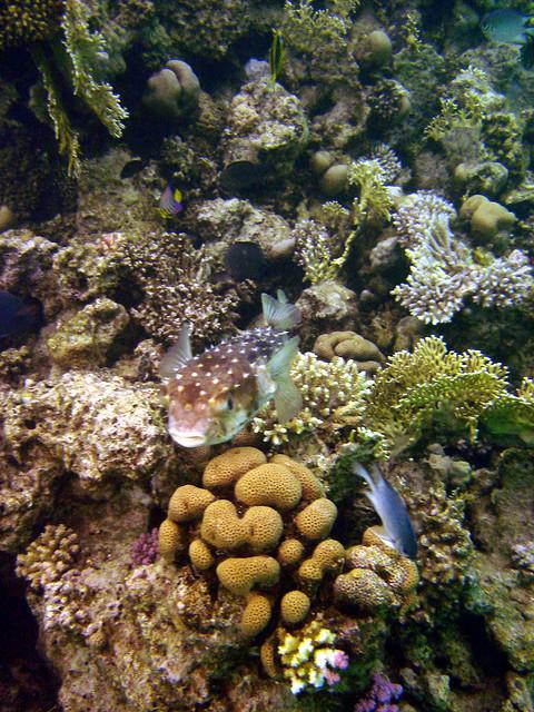 Marsa Alam a potápění