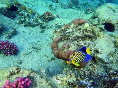 Podmořský svět letoviska El Quseir