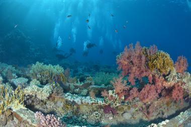 Podmořský svět Sinajského poloostrova