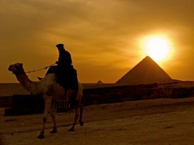 Velbloud u pyramidy