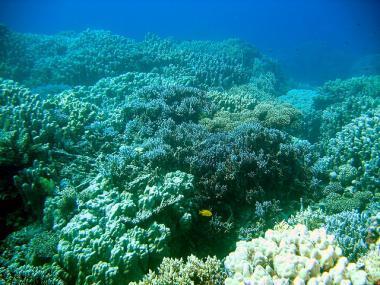 Egyptská Hurghada a podmořský svět