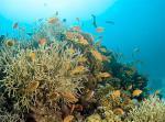 Podmořský svět Hurghady